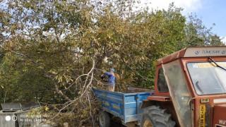 Hüyük'te sürücülerin görüşünü engelleyen ağaçlar budanıyor