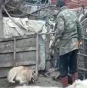 Köpeği döven şahıs polis tarafından yakalandı