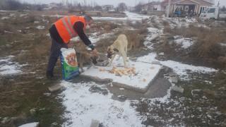 Akşehir Belediyesi sokak hayvanlarını unutmuyor
