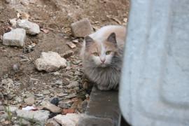 Çatıda mahsur kalan kediyi itfaiye ekipleri kurtardı