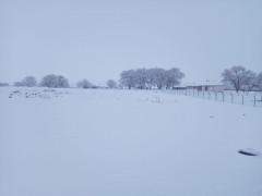Kulu'da kar yağışı çiftçileri sevindirdi