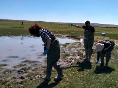 Kıyı kuşlarının salgın oluşturma risklerinin tespiti için araştırma başlatıldı