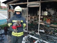 Konya'da büfe yandı, kediler ve köpek kurtarıldı