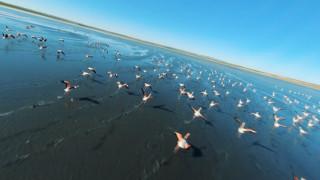 Kuş cenneti Düden Gölü'nde flamingolardan görsel şölen