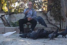 """""""Evladım"""" dediği güvercinlerine 50 yıldır bakıyor"""
